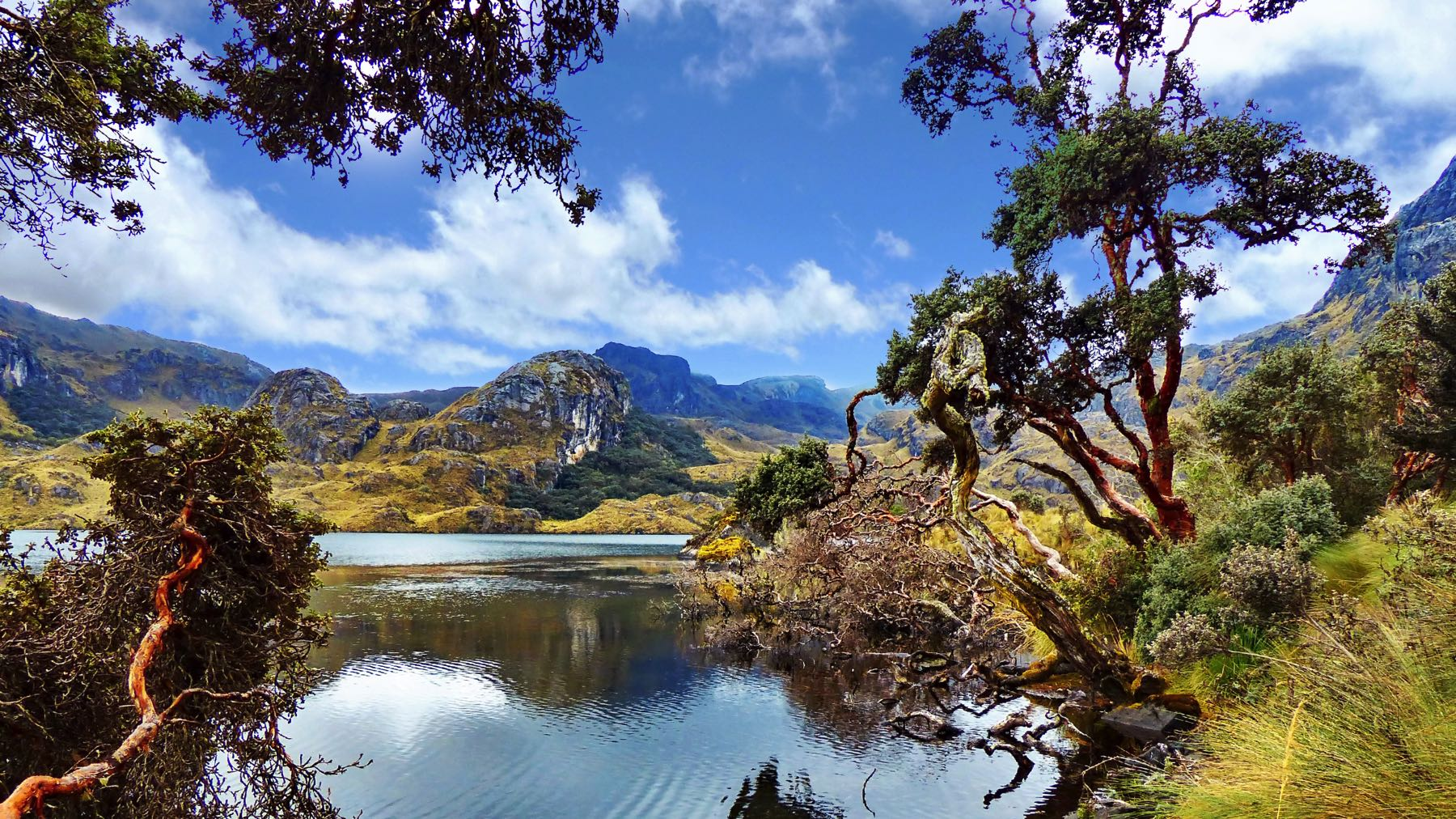 Hiking El Cajas National Park: Ecuador's Undiscovered Gem